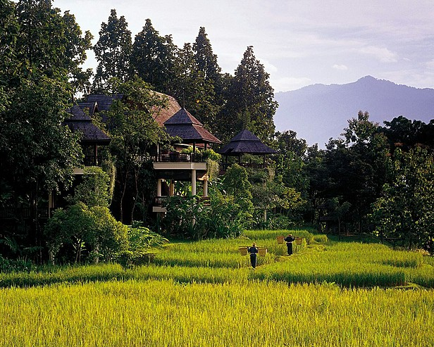 Four Seasons Resort Chiang Mai > Local workers in the rice fields