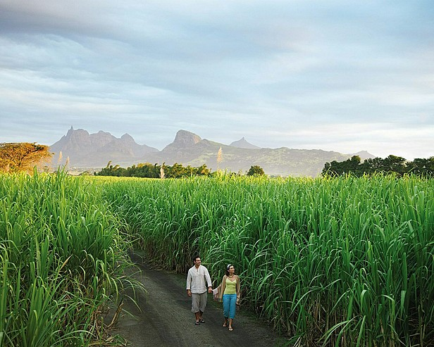 Resort Four Seasons Mauritius at Anahita > Couple in sugar cane field