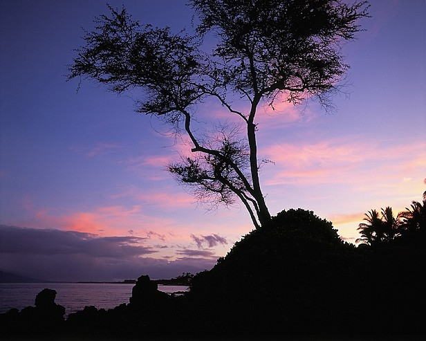 MAU 002 616x493 - Wailea Alanui , Hawaii , U.S.A