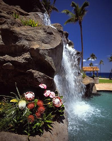 MAU 066 394x493 - Wailea Alanui , Hawaii , U.S.A